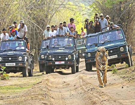 North India Wildlife Cultural Tour