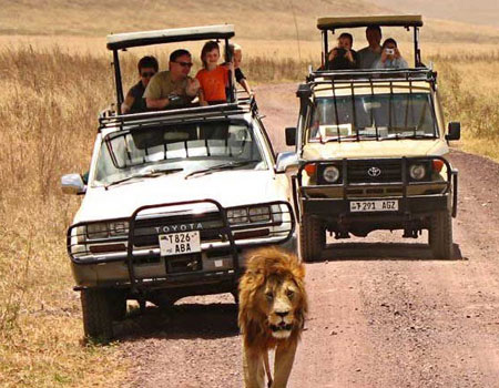Wildlife Safari Tour